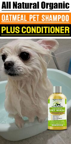 Our Oatmeal Dog Shampoo And Conditioner is recommended by Vets and Specially formulated for pets with allergies to food, grass and flea bites. Oatmeal Shampoo, Cat Shampoo, Shampoo And Conditioner, Magic For Kids, Dog Smells, Natural Vitamin E, Flea Treatment, Dog Eyes, Biodegradable Products