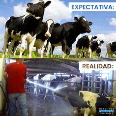 La industria de los lácteos es cruel Animal Rights, Vegan Life, Vegans, Going Vegan, Pet Care, Creatures, Stickers, Memes, Natural