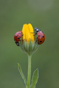 """Two Ladies-in-Red!"" (Photo By: Nazire Avlar on 500px.)"