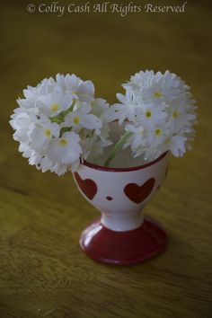 Primulas in an Egg Cup when you don't have a vase small enough, improvise
