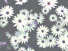 .white