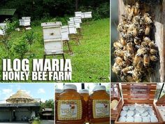 Health and Wellness Products at IIog Maria in Cavite Consumer Culture, Bee Farm, Tourist Spots, Health And Wellness, Shampoo, Honey, Tagaytay, Wellness Products, Organic