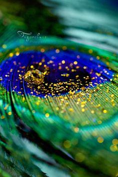 Golden Peacock II by tigerelune on DeviantArt Peacock Wallpaper, Wallpaper Nature Flowers, Beautiful Flowers Wallpapers, Beautiful Nature Wallpaper, Of Wallpaper, Flower Wallpaper, Peacock Images, Peacock Pictures, Peacock Art