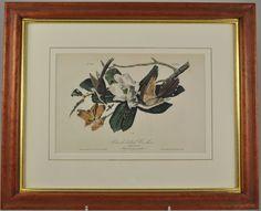 "Original Audubon 1st Ed Octavo Lithograph ""Black-billed Cuckoo"" Birds of America Magnolia, $295"