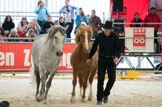 Honza Blaha & his horses