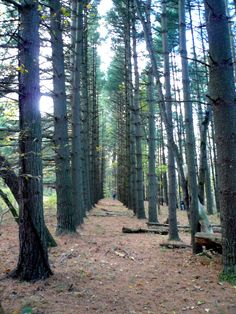 Interesting forest picture