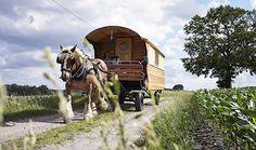 Heide Caravan - Jetzt buchen! Abenteuerreisen im Pferdecaravan/ Planwagen durch die Lüneburger Heide