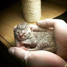 Welcome to to world little boy  #cat #catslover #catsofinstagram #catstagram…