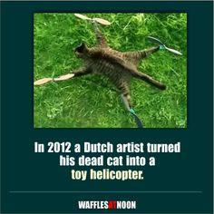 Not your typical pet memorial.