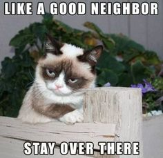 """Here's collection of some """"Top 22 Grumpy Cat Memes Hilarious"""" that are so funny and humor.Just scroll down and keep enjoy these """"Top 22 Grumpy Cat Memes Hilarious"""". Memes Humor, Funny Cat Memes, 9gag Funny, Pet Memes, Funny Kittens, Adorable Kittens, Funny Humor, Hilarious Jokes, Ragdoll Kittens"""