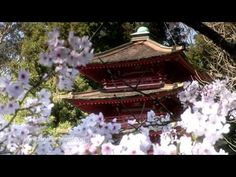 Zen Garden - Cherry Blossoms, Relaxation & Meditation - 50 minutes - YouTube AWESOME MEDITATION VIDEO
