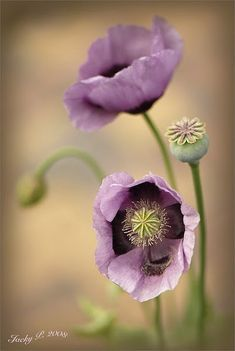Purple flowers are a great way to add interest to your yard or landscape. Here are Different Types of Purple Flowers for Your Garden and Purple Flowers Meaning.