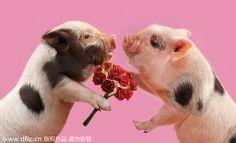 Valentine's Day of animals