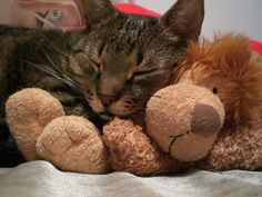 Because a teddy bear is always a good idea :)