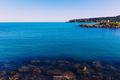 Horizon & palm trees French Riviera, Palm Trees, Water, Photography, Outdoor, Image, Palm Plants, Gripe Water, Outdoors