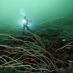 Photo by @BrianSkerry A diver explores a forest of whip coral in the temperate waters of Japan's Suruga Bay off the Izu Peninsula. The combination of multiple rivers flowing into the bay and deep submarine canyons create a perfect environment for a fascinating range of animals.  Photographed on assignment for @natgeo. @ThePhotoSociety @natgeocreative #japan #explore #underwater #nature