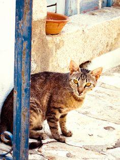 Cat in Symi Greece