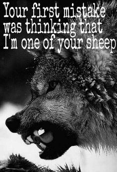 """""""We humans fear the beast within the wolf because we do not understand the beast within ourselves"""" ~ No better words to describe our deepest fears. Wolf Spirit, Spirit Animal, Beautiful Creatures, Animals Beautiful, Beautiful Wolves, Animals And Pets, Cute Animals, Wolf Hybrid, Timberwolf"""