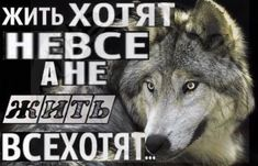Russian Memes, Husky, Chill, Mood, Fun, Pictures, Animals, Photos, Animales