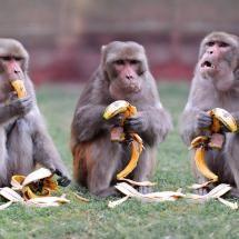 Monkeys And Bananas Cute Wallpaper 143 Best Wild Animals Images Animals Animals Beautiful