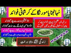 Health Benefits Of Moringa Vegetable Benefits, Fruit Benefits, Health Benefits, Health Tips, Islamic Knowledge In Urdu, Cooking Recipes In Urdu, Henna Patterns, Medical Advice, Healthy Life