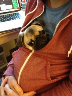 when I get my pug maybe this is how Ill smuggle him into work?!