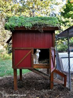 """I love the """"living roof"""" idea, they also make living roof birdhouses. ralph205"""