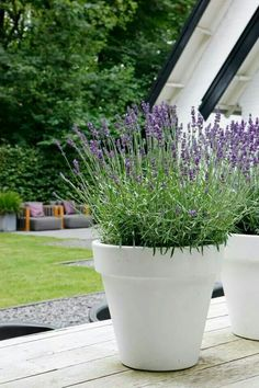 Perhaps have the lavender in white pots for a slightly more bridal look.