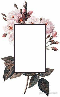 Framed Wallpaper, Flower Background Wallpaper, Flower Backgrounds, Logo Background, Beauty Background, Pattern Background, Wallpaper Quotes, Wallpaper Backgrounds, Iphone Wallpaper