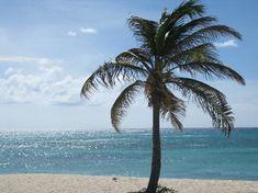 Marriott Aruba Resort & Stellaris Casino: Palm Tree on Beach