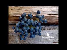 Gumpaste, flower paste sugar berry tutorial - YouTube