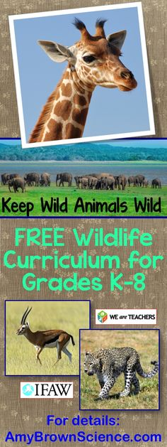 A Wildlife Curriculum for Grades K-8 from We Are Teachers and the International Fund for Animal Welfare.