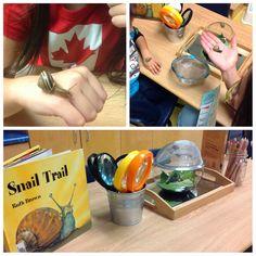 Snail Inquiry