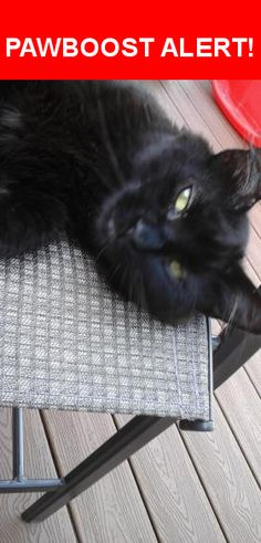 Is this your lost pet? Found in East Greenbush, NY 12061. Please spread the word so we can find the owner!  Very loving, friendly black fluffy cat, 3 years old or less  Near Isabella Ct & Waters Rd