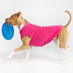 gold paw fleece in fun new colors plus lots of pit bull eye candy!