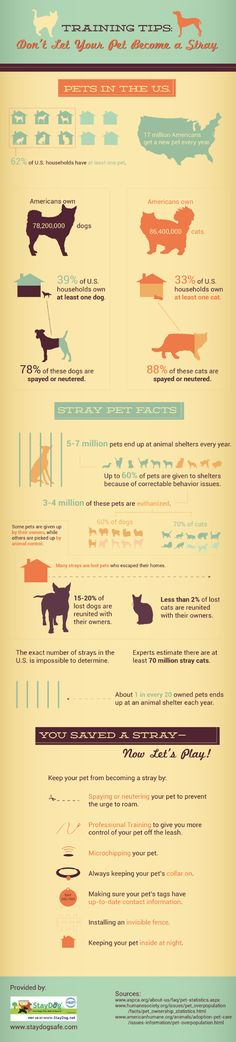 Did you know that millions of household pets end up in an animal shelter each year? While some pets are given up by their owners, many others are pick