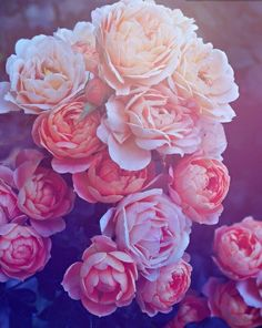 Roses for wedding flowers