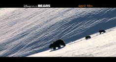 A movie review of Disney's latest critter flick, Bears. Hint: It's awesome. http://www.adventure-journal.com/2014/05/a-movie-review-of-disneys-bears-hint-awesome/