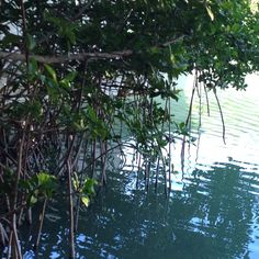 I bet there's a snook waiting there in the shade of the mangrove.