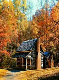 Cabin in the autumn woods. So rustic and rough-hewn, love it