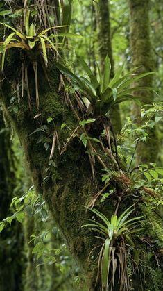 Tropical Forest, Tropical Garden, Tropical Plants, Rainforest Plants, Amazon Rainforest, Brazil Rainforest, Paludarium, Vivarium, Photo D Art