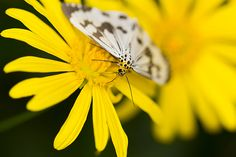Flying Flowers, Flower Art, Photography, Animals, Art Floral, Photograph, Animales, Animaux, Fotografie