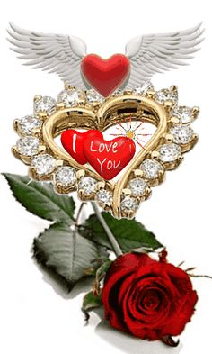 1 million+ Stunning Free Images to Use Anywhere Beautiful Love Images, Good Night Love Images, Love Heart Images, I Love You Pictures, Love You Gif, I Love Heart, Beautiful Roses, Good Morning Love Gif, Good Morning Beautiful Flowers