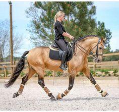 Cute Horses, Pretty Horses, Horse Love, Beautiful Horses, Dressage Horses, Horse Tack, Horse Stalls, Horse Barns, Horse Photos