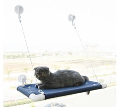 cat window perch suction cups let your kitty  panion snooze in style with our window hammock      rh   pinterest
