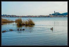 Canards sur l'étang de Gruissan par Philip