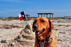 10 top Texas state parks for dogs