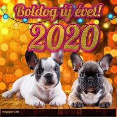 Boldog új évet 2020! - Megaport Media Share Pictures, Animated Gifs, Happy New Year 2020, Evo, French Bulldog, Dogs, Animals, Creative, Animales