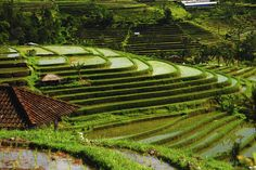 Rice terraces, Bali, Indonesia- Too Beautiful To Be Real? 16 Surreal Landscapes Found On Earth Places To Travel, Places To See, Travel Destinations, Places Around The World, Around The Worlds, Mysterious Places On Earth, Bali Garden, Bali Lombok, Rice Terraces