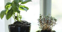 Little Projectiles: Self-Watering Planters - FMI:  use plastic water bottles